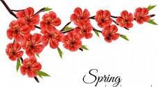 美丽花朵 春季矢量图 红花