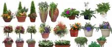 盆栽 花钵 植物素材