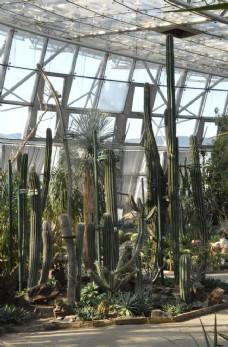 植物园温室