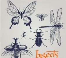 手绘昆虫矢量素材