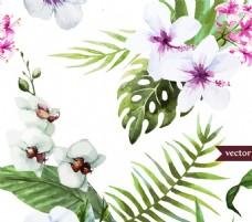 白色扶桑花和蝴蝶兰矢量图