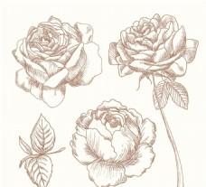 手绘玫瑰花矢量素材