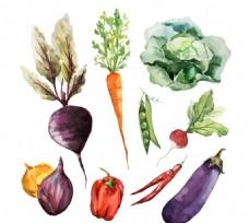 水彩蔬菜矢量素材