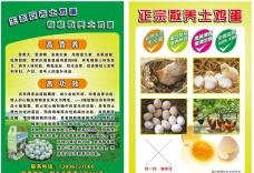 土鸡蛋 宣传单 绿色 海报
