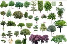 各种景观树