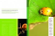 生物昆虫画册PSD设计模板