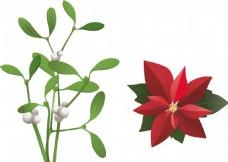 苜蓿 花朵