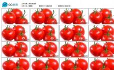 鲜艳番茄西红柿特写实拍蔬菜美食