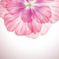 炫彩花朵背景