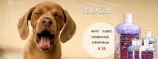 宠物沐浴露海报模板