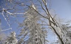 树林  雪