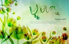 韩国郁金香花卉背景