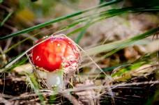 高清背景风景素材蘑菇图片