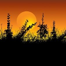 树叶的轮廓,在夕阳的天空