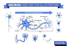 神经元自由向量图