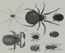 蜘蛛蝎子蛐蛐昆虫笔刷