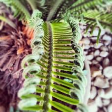 绿色植物以上卵石