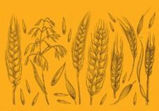 手绘燕麦草图