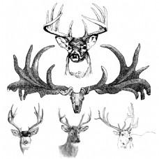 素描绘制各种不同角度鹿头鹿角