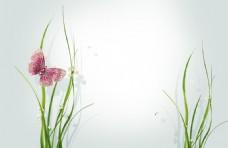 蝴蝶和植物淘宝背景