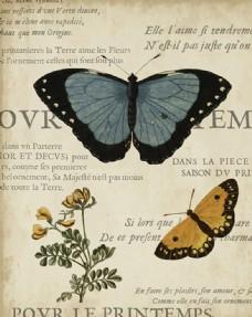 美式蝴蝶装饰画