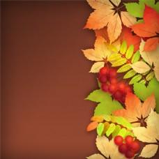 秋天果子枫叶图片