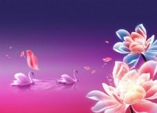 花朵和天鹅