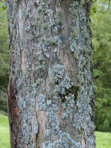 树干上的纹理