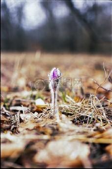 枯叶下的花朵