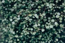树叶,植物,植物