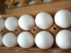 蛋托里的鸡蛋