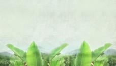清新植物淘宝背景