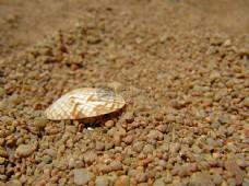 地面上的贝壳