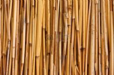 随意摆放的竹子
