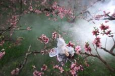 桃花与美女摄影图片