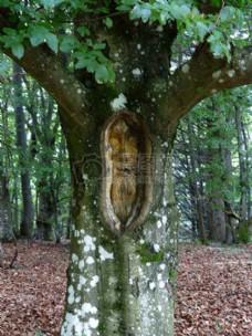 森林中的树脸雕刻