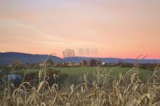日落,领域,日出,农业,农场,玉米,地平线,养殖,玉米,玉米,行