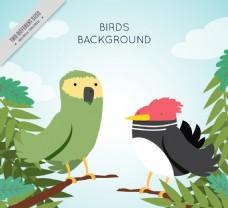丛林中的异国鸟类的背景