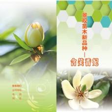 景观苗木新品种 香 妃