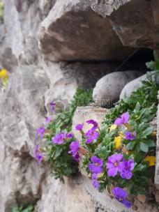 花,石头,灰色,紫色,花