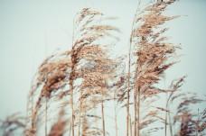白天褐色干枯植物
