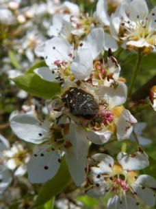 花朵上的甲虫