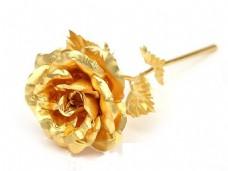 一支镀金玫瑰花图片