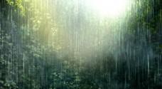 森林自然视频素材
