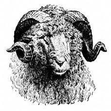 素描绘画黑白绵羊