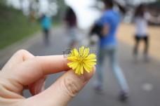 手中的黄色花朵