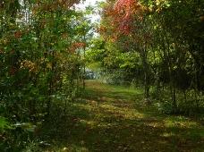 森林的悠然小径