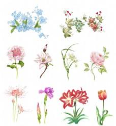 手绘鲜花免抠图