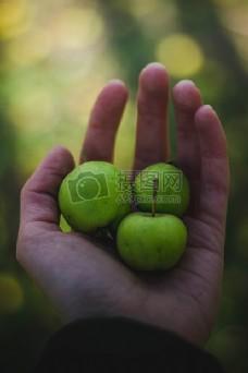 健康,手,水果,收获,苹果