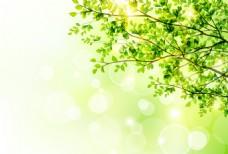 春季绿色背景矢量图
